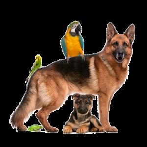 dijagnostika-i-terapija-veterinar-nikolasev-beograd