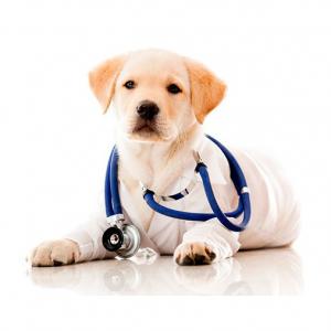 veterinarske_usluge_nikolasev_2