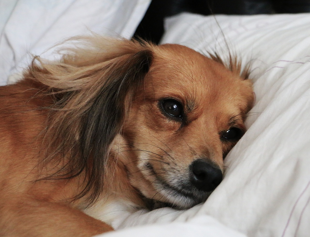 Pas oboleo od štenećaka